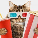 movie cat quiz feature
