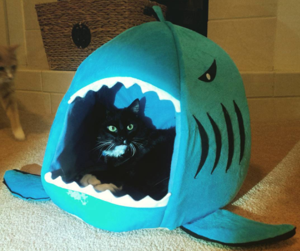 shark week cats feature