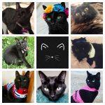 black cat quiz feature