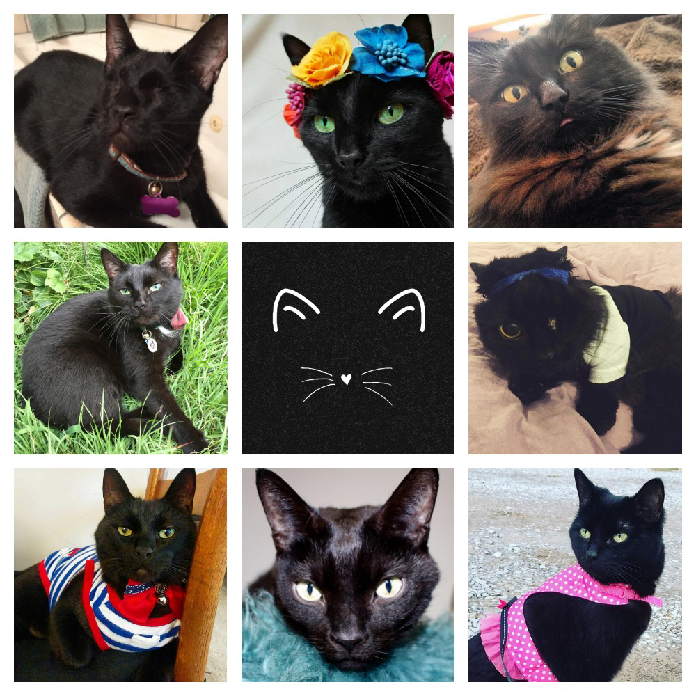 black cat quiz feature