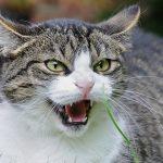 cat psychopath quiz feature