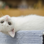 famous cat lovers quiz feature