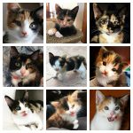 cute calico kittens feature