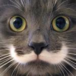 hamilton mustache cat feature
