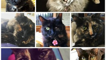 special tortie quiz feature