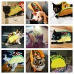 taco cats feature