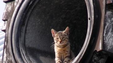 cat monuments feature