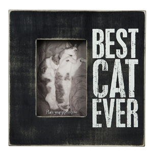 cat picture frames