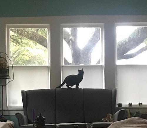 blind tortoiseshell cat