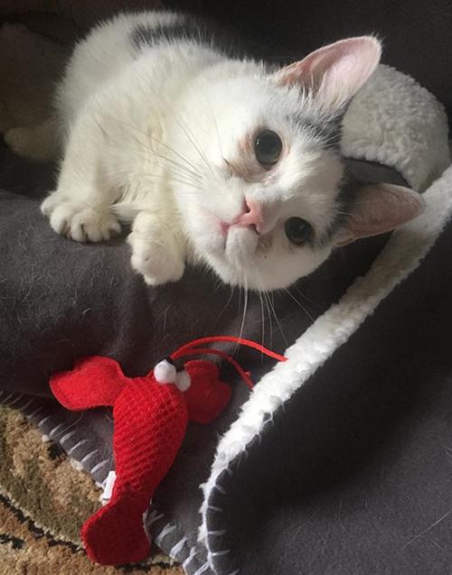 blind rescue munchkin cat