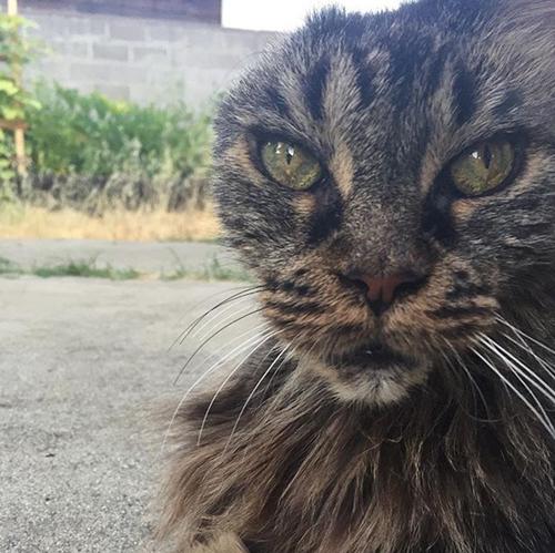 one eared senior cat inoperable brain tumor