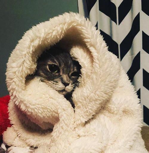 forever kitten cat