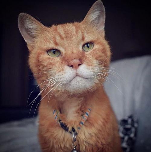 feline audiogenic reflex seizure fars cat