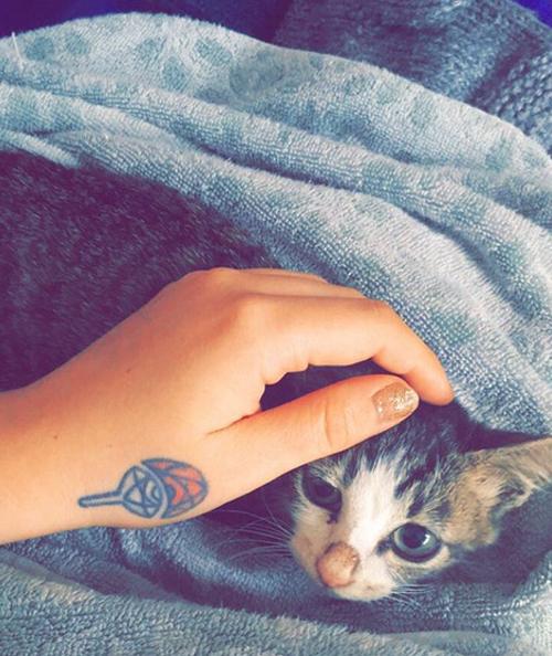 two legged kitten cat