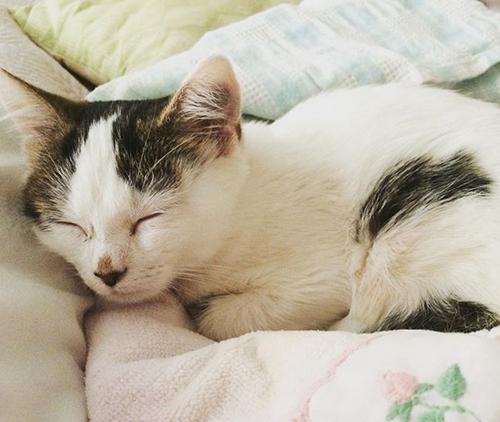 paralyzed diaper cat