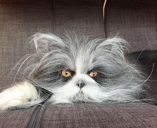atchoum werewolf cat hypertrichosis