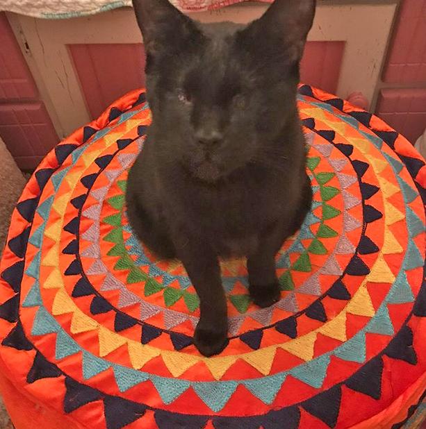 blind black cat