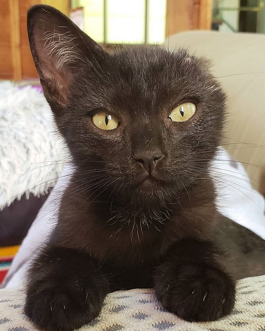Meet The Adorable One-eared Kitten Who Found His Forever